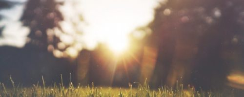 la-hierba-verde-y-la-puesta-de-sol_426-19314778